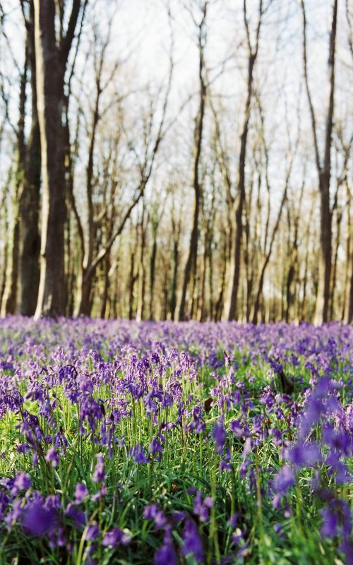 Bluebell scouting // That Light Though!!!